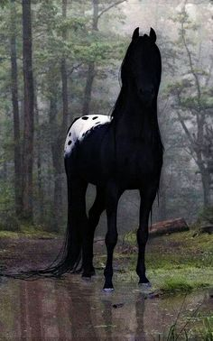 This is one of the most beautiful Appaloosa horses I have ever seen! Treville's…This is one of the most beautiful Appaloosa horses I have ever seen! All The Pretty Horses, Beautiful Horses, Animals Beautiful, Beautiful Things, Animals And Pets, Funny Animals, Cute Animals, Pretty Animals, Black Animals