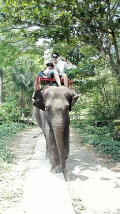 1 visitor has checked in at Elephant village. Bangkok, Elephant, Big, Animals, Animales, Animaux, Elephants, Animal Memes, Animal