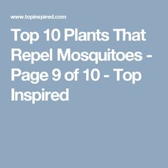 Top 10 Plants That Repel Mosquitoes - Page 9 of 10 - Top Inspired