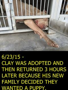 PLEASE SHARE CLAY! He is at San Bernardino KILL Shelter https://www.facebook.com/PetConnect.Us/photos/a.71470379976.18363.71459069976/10150616885779977/?type=1