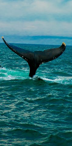 The best whale watching tour -  in Brier Island in the Bay of Fundy in Digby County, Nova Scotia, Canada #travel #vacation