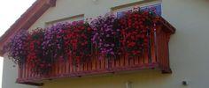 NapadyNavody.sk | Ako sa starať o muškáty čo najlepšie, aby sa vám odmenili bohatými žiariacimi kvetmi Plants, Painting, Gardening, Painting Art, Garten, Flora, Paintings, Plant, Paint