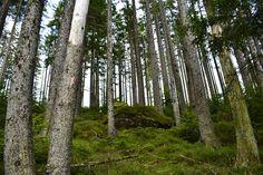 Les Šumava Trunks, Plants, Drift Wood, Tree Trunks, Plant, Planets