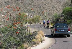 Ocotillo-Saguaro National Park East