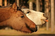 Funny horse faces :)