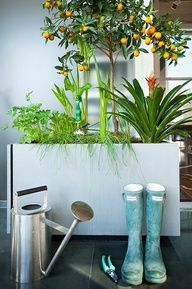 What a great indoor garden idea.  Rent-Direct.com - Apartments for Rent in NYC with No Brokers Fee.