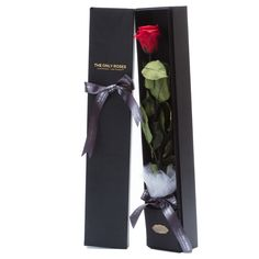 Red with One Black Preserved Roses Rose Rise, Rose Hat, Red Rose Bouquet, Types Of Roses, Preserved Roses, Flower Packaging, Rose Arrangements, Growing Roses, Single Rose