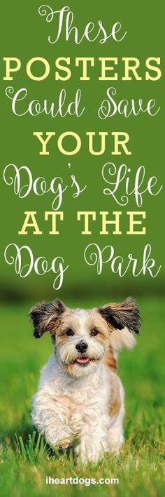 These Posters Could Save Your Dog's Life At The Dog Park