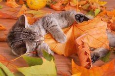 Kitty loves leaf.