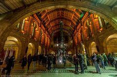 green lighting natural history museum london wedding - Google Search