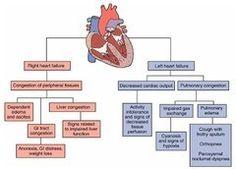 Left Sided Heart Failure Diagram