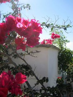 Kavos Naxos Bouganvilia Garden Pictures, A Boutique, Trip Advisor, Floral Wreath, Wreaths, Holiday, Party, Home Decor, Vacations