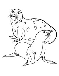 Free Seal Coloring Page Fabric Pictures, Colorful Pictures, Coloring Pages For Kids, Coloring Sheets, Artic Animals, Angel Drawing, Color Activities, Animal Sculptures, Animal Drawings