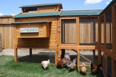 Chicken Coop Pictures from Sandpoint, Idaho