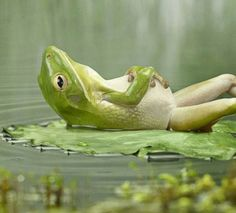 ahhhh the life of a frog...seems pretty easy to be green today!