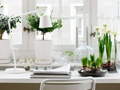Going green...and white... belle maison: Terrariums: Mini Indoor Gardens