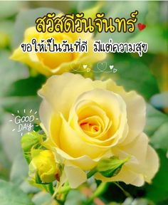 Good Day, Good Morning, Nice, Flowers, Plants, Buen Dia, Buen Dia, Hapy Day, Bonjour