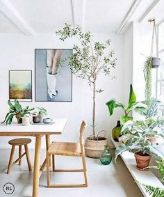 spruce up a room by bringing in plants and trees