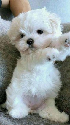 Puppy love💜