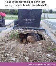 That's why I love dogs. So sad