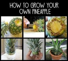 Pineapple.. wonder if this is for real
