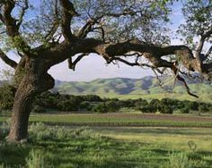 foxen santa ynez valley Places Ive Been, Places To Visit, Michael Jackson Neverland, Santa Ynez Valley, Santa Barbara, Santa Maria, California Dreamin', Beautiful World, Scenery