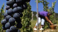 La vente de vin de luxe sur Internet peut-elle remettre en cause l'image traditionnelle du secteur ?