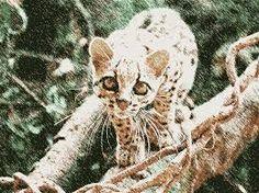 """Résultat de recherche d'images pour """"panthère nébuleuse"""" Panther, Images, Owl, Bird, Animals, Search, Animales, Animaux, Panthers"""
