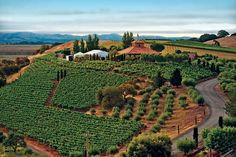 Idyllically situated on a hilltop at the entrance to the legendary Sonoma Valley, Viansa Winery & Marketplace has become a destination for wine and food lovers from around the world.