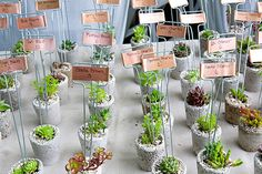 succulent - wedding favors