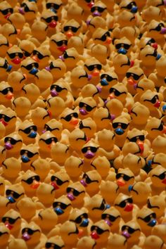 1000 Images About Ducks In Sunglasses On Pinterest