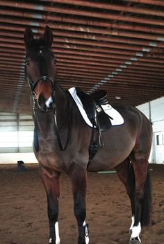 Equidae (the-eventer: Handsome man rocking his Ogilvy! Cute Horses, Pretty Horses, Horse Love, Horse Girl, Beautiful Horses, Horse Photos, Horse Pictures, Horse Therapy, Horse Posters