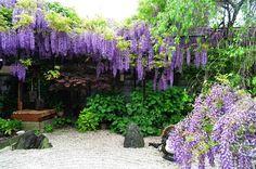 #wisteria #garden