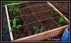 Square-Foot Gardening.  Perfect organization for small raised beds.