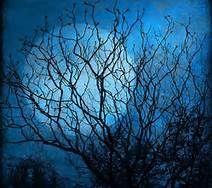 beautiful blue things - Bing Images