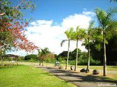 Luis Muñoz Marín Park es parque popular en Puerto Rico. los puertorriqueños descansan en el parque cuando hace bien tiempo.