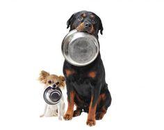 Se tem a sorte de ter um Rottweiler como amigo de quatro patas, nós damos algumas dicas para o ajudar :) #cães #cachorros #animais #rottweiler #dogs