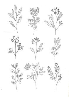 by Ryn Frank .ukBotanics by Ryn Frank . Doodle Drawings, Doodle Art, Simple Doodles Drawings, Ink Doodles, Simple Line Drawings, Plant Drawing, Flower Doodles, Doodle Flowers, Motif Floral