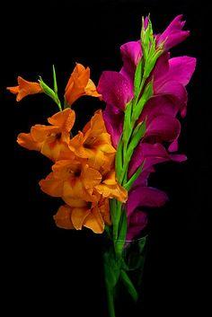 Orange and Fuschia.....gladiolas