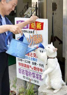 熱中症予防の猫 a cat preventing heat stroke
