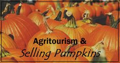 For many of us that run fall agritourism businesses, we have discovered the significant impact that selling pumpkins can make to our bottom line.  In this article, we'll talk about the reasons that you should be selling pumpkins, selling & pricing strategies, growing vs. buying, and more.