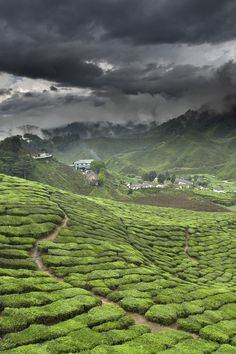 Green Tea Factory amidst the teafields, Fujian Province, China 福建 茶園 Places Around The World, Oh The Places You'll Go, Places To Travel, Places To Visit, Travel Destinations, Cameron Highlands, Posters Vintage, Munnar, Kuala Lumpur