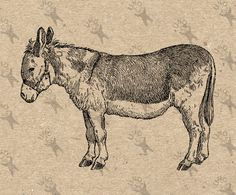 Donkey Antique Retro Drawing image Instant Download printable Vintage picture clipart digital graphic for  transfer, iron on  etc HQ 300dpi by UnoPrint on Etsy #hq #png #bw #Ephemera #diy #old #book #illustration #gravure #inspiration #retro #antique #vintage #300dpi #craft #draw #drawing  #black #white #printable #crafts #transfer #decor #hand #digital #collage #scrapbooking #quality