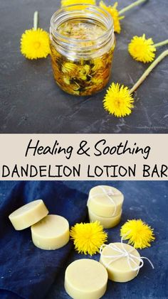Transferring the power of dandelions in a natural and easy to make lotion bars is a smart way to alleviate dry cracked or chapped hands from heavy gardening or other manual labour. #herbalism, #herbalhealth, #naturalremedies, #skincareremedies, #herbaldiy Skin Care Remedies, Health Remedies, Natural Remedies, Vegan Recipes Plant Based, Real Food Recipes, Diy Beauty Tutorials, Diy Natural Beauty Recipes, All Natural Skin Care, Lotion Bars