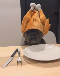 Patiently waiting for thanksgiving like. Super Cute Puppies, Cute Baby Dogs, Cute Little Puppies, Cute Funny Dogs, Cute Little Animals, Cute Funny Animals, Cute Animal Photos, Cute Animal Videos, Funny Animal Pictures