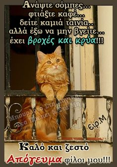 Cat Quotes, Sign Quotes, Funny Cat Memes, Funny Cats, Silly Cats, Animals Beautiful, Beautiful Images, Good Afternoon, Ginger Cats