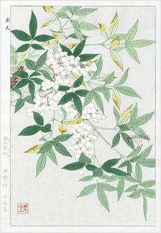 Nandina from Shodo Kawarazaki Spring Flower Japanese Woodblock Prints Japan Illustration, Illustration Blume, Vintage Botanical Prints, Botanical Drawings, Botanical Art, Japanese Art Styles, Japanese Prints, Illustration Botanique, Historia Natural