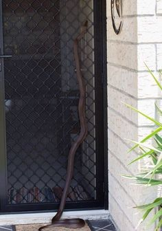 Though we prefer when they use the front door. | 29 Reasons Why Australia Is Basically Heaven If You Love Snakes