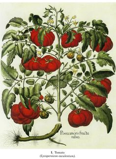 I have been debating about a small tattoo of a tomato plant flower for ages. I'd want it to look like an old fashioned sketch.