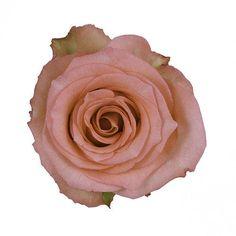 Coral Pink Roses Wholesale Wedding Flowers